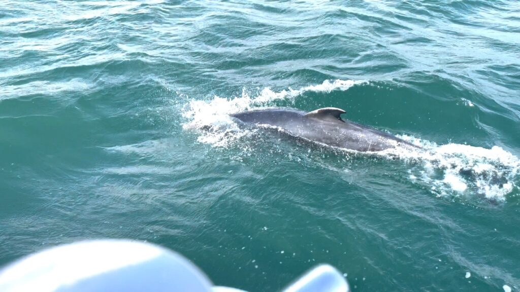 Saucepan Kids visit Carlingford Boat Tours - Fairways Hotel - top things to do with teenagers in Ireland's Ancient East - Finn the Dolphin
