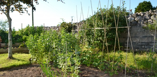 7 top tips for growing your own veg
