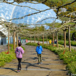 A visit to Eden Project in Cornwall with the kids – Review