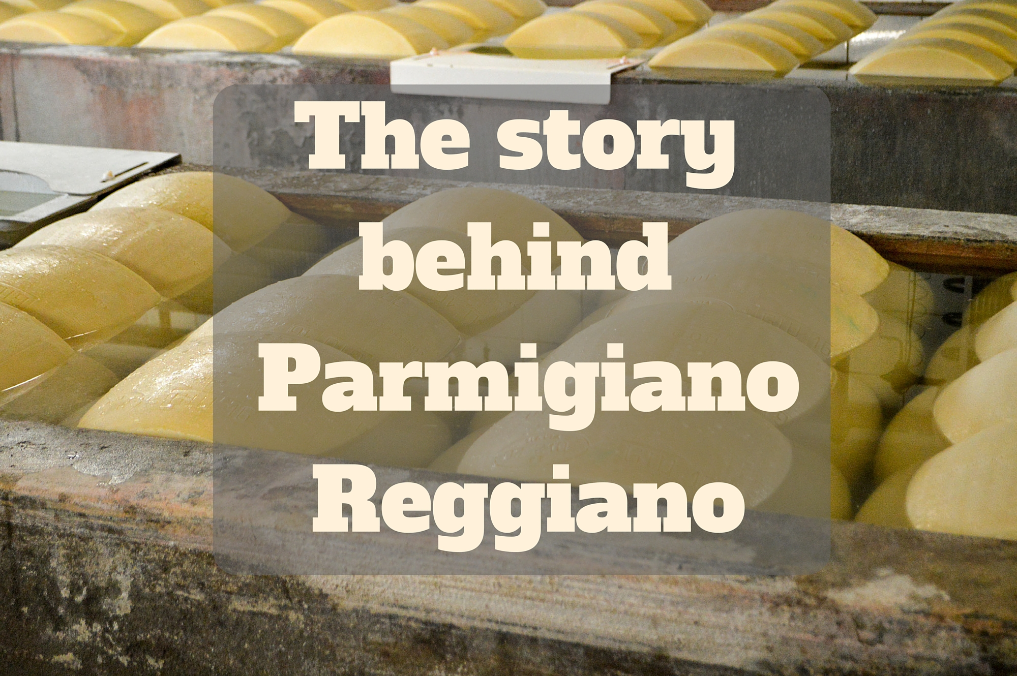 The story behind Parmigiano Reggiano - told by Saucepan Kids - Things for foodie families in Emilia-Romagna